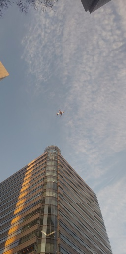 都庁に落陽、そして山田パンダはまた飛行機乗れる日が来るのでしょうか…。_b0096957_16595825.jpg