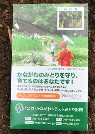 春大根とコマツナ種蒔き2・4_c0014967_17284915.jpg