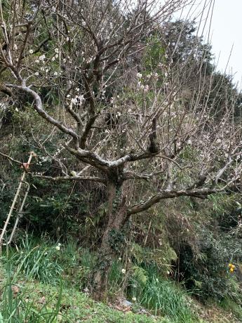 春がそこに_a0077071_13421437.jpg