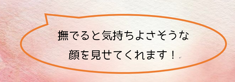 2019年度後期研修ツアー「冬の浜名湖・浜松を遊び尽くそう!」ご報告♪_d0073476_13184142.png