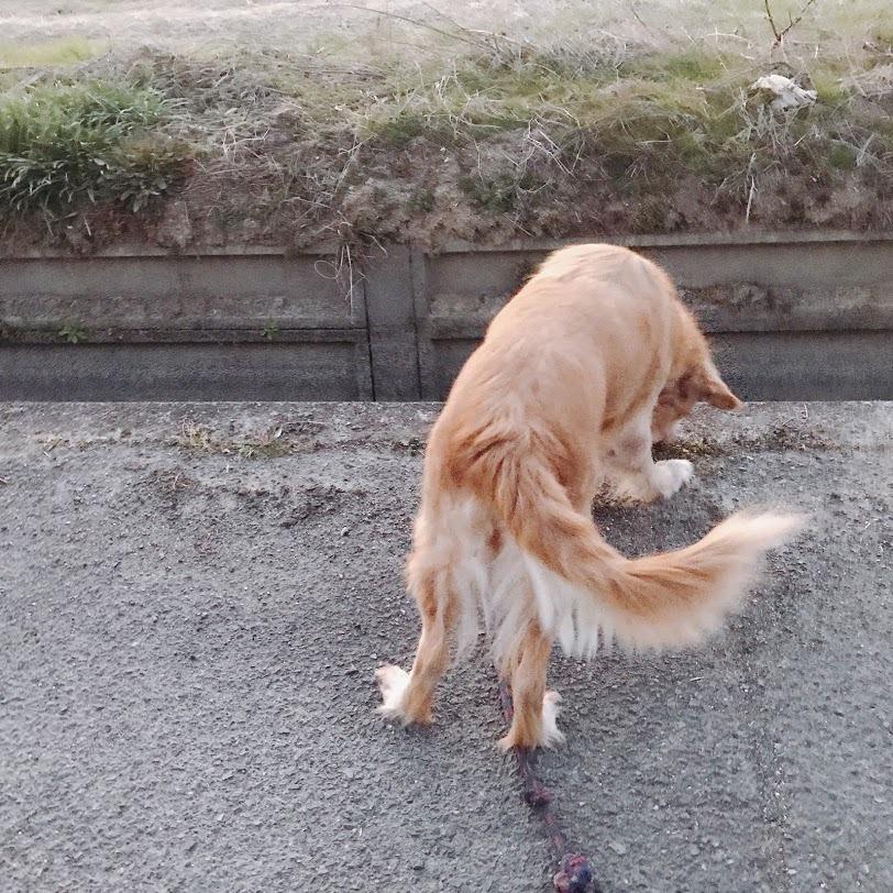 定点観察「いつも、ココちゃん散歩で観察します。」_e0359584_23580460.jpg