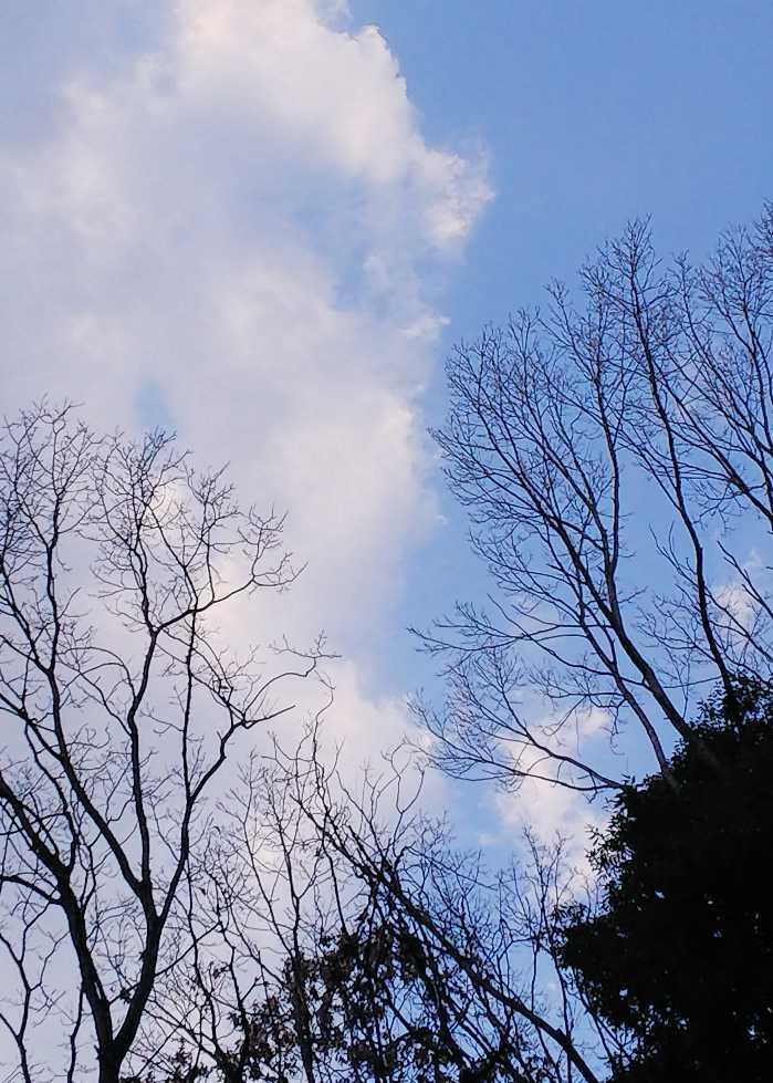 寒い日の庭_e0303187_23264197.jpg