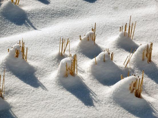 冬の朝を歩く_d0366590_19420674.jpg