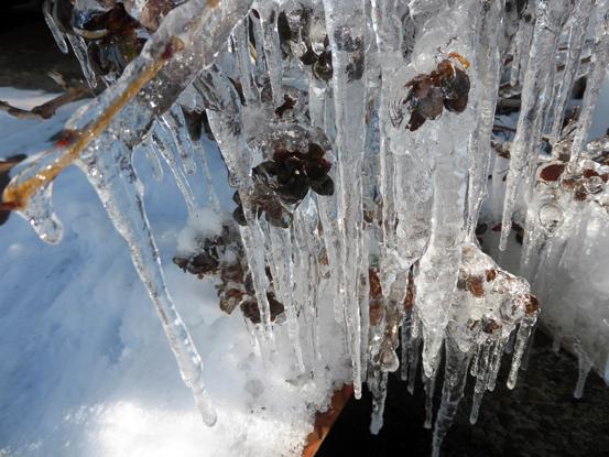 冬の朝を歩く_d0366590_19464300.jpg