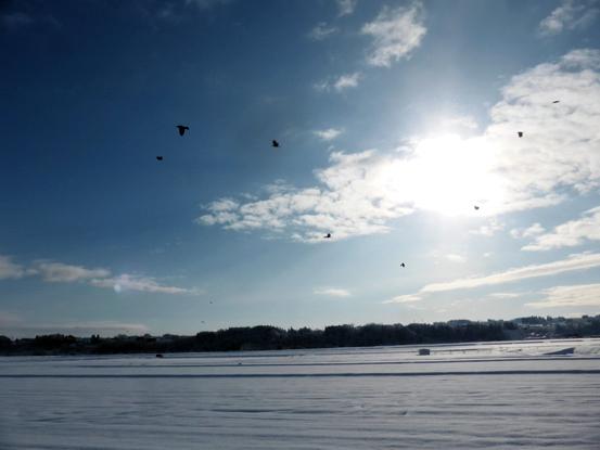 冬の朝を歩く_d0366590_19524090.jpg