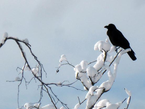 冬の朝を歩く_d0366590_19524120.jpg