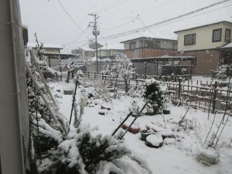 天気予報は雪達磨だらけ・おから鮨_a0203003_19373549.jpg