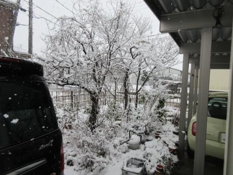 天気予報は雪達磨だらけ・おから鮨_a0203003_19374733.jpg