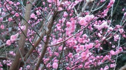 立春です。_c0280108_21131308.jpg