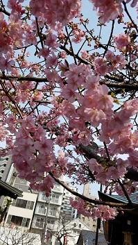春二つ、三つ  栗山由利_f0371014_11343281.jpg