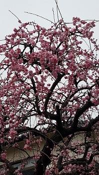春二つ、三つ  栗山由利_f0371014_11344192.jpg