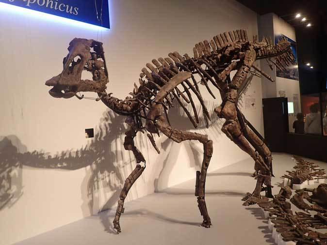 恐竜博2019~祝・新種記載!その名もカムイサウルス!!【前編】_b0355317_20340815.jpg