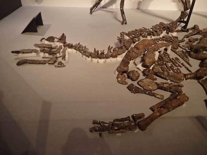 恐竜博2019~祝・新種記載!その名もカムイサウルス!!【前編】_b0355317_20385822.jpg