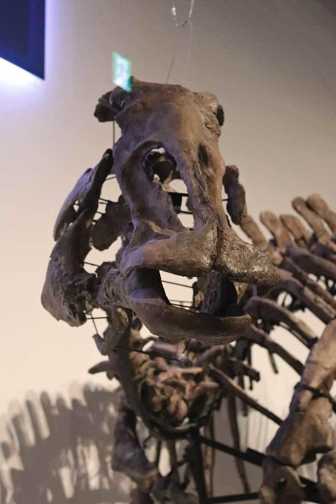 恐竜博2019~祝・新種記載!その名もカムイサウルス!!【前編】_b0355317_20590831.jpg