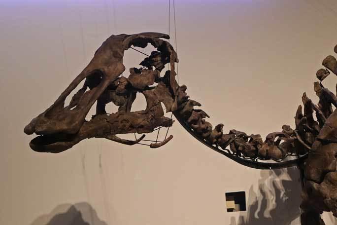 恐竜博2019~祝・新種記載!その名もカムイサウルス!!【前編】_b0355317_21012829.jpg