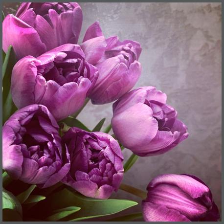 春の花_d0126721_21474655.jpg