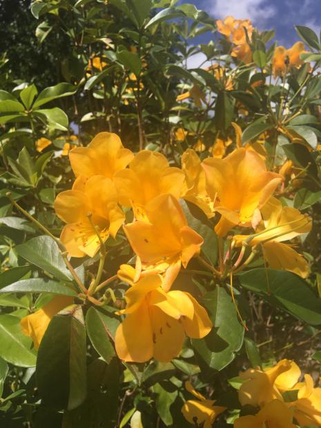 ♡今月のお知らせ♡ハワイでの日々・・・_e0131324_10230777.jpg