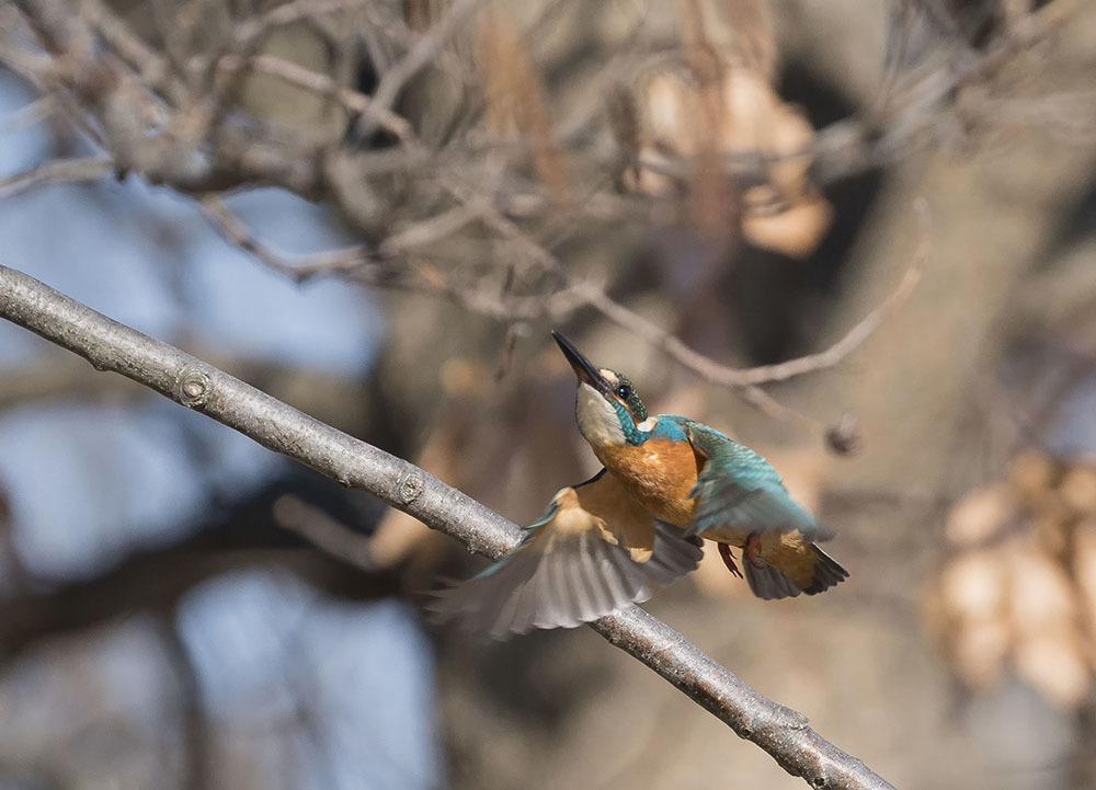 都市公園で久しぶりに野鳥撮影_f0324026_20045165.jpg