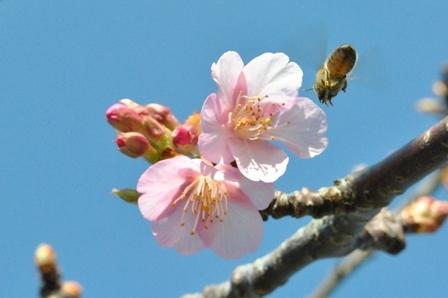 ぶんぶんぶん♪ハチが飛ぶ~♬_a0123836_17160147.jpg