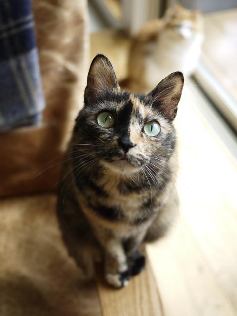 猫のお留守番 さんかちゃん編。_a0143140_23420391.jpg
