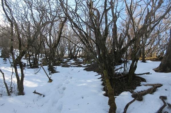 冬の越前岳_d0164761_15490063.jpg