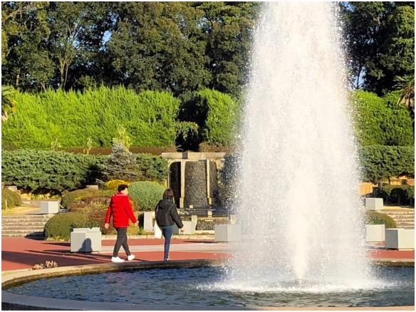 < 植物園 >_c0036080_13433893.jpg