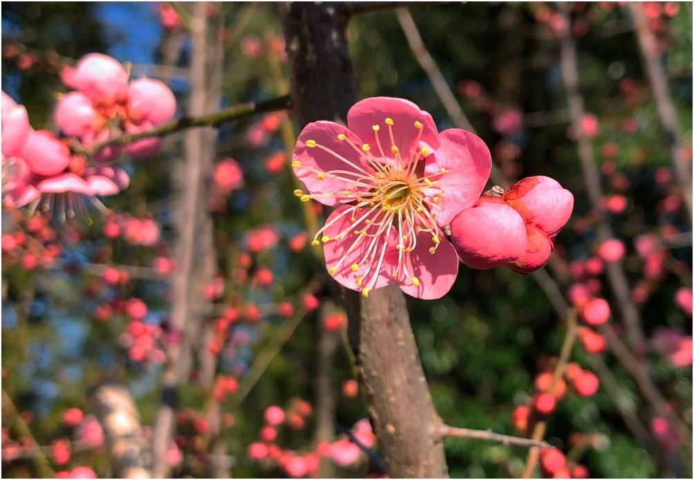 < 植物園 >_c0036080_13452967.jpg