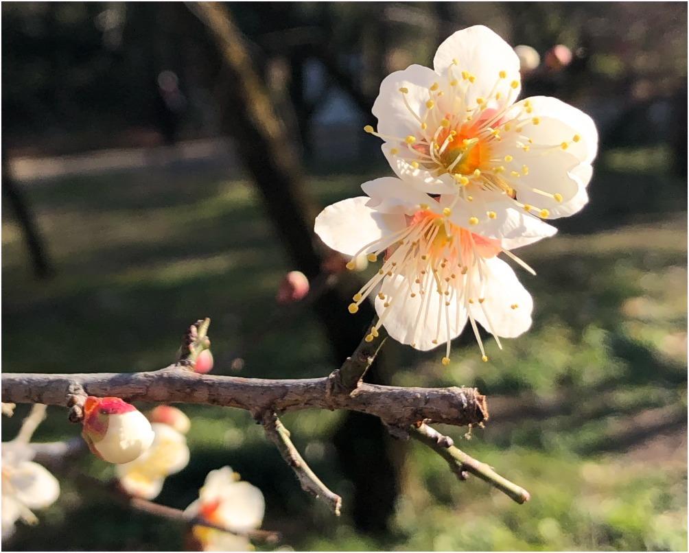 < 植物園 >_c0036080_13454785.jpg