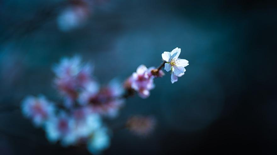 四季桜が咲く運河_d0353489_19102601.jpg