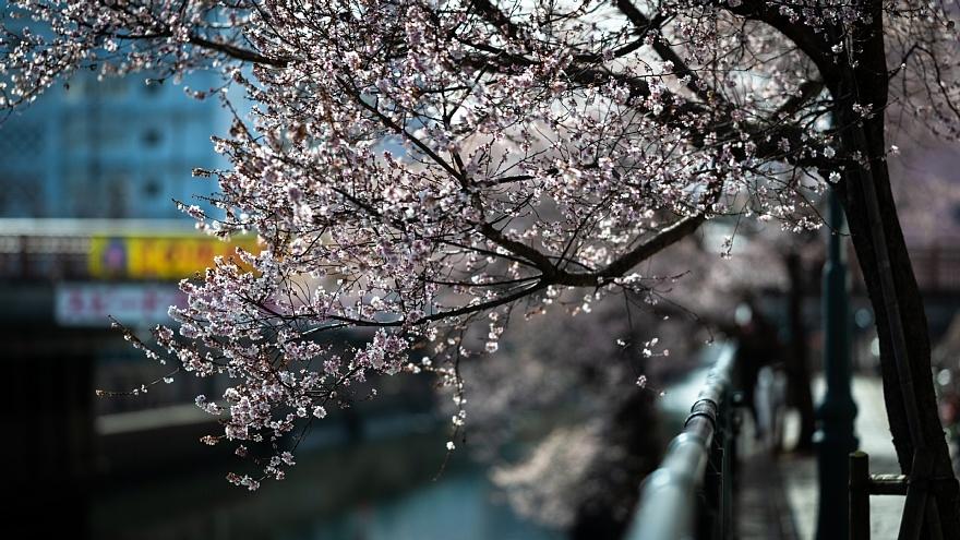 四季桜が咲く運河_d0353489_19103115.jpg