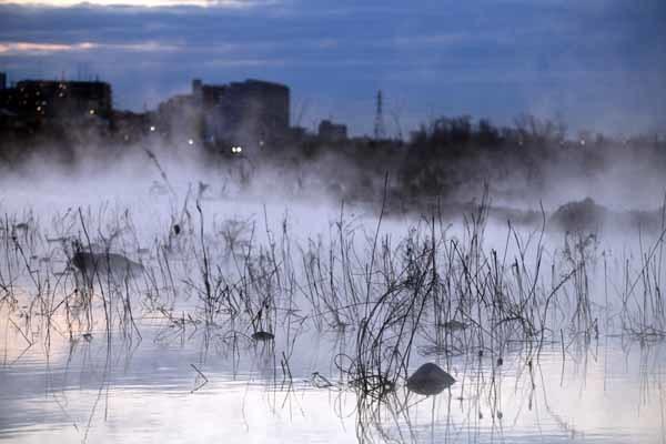 多摩川の川霧_f0173596_10335744.jpg