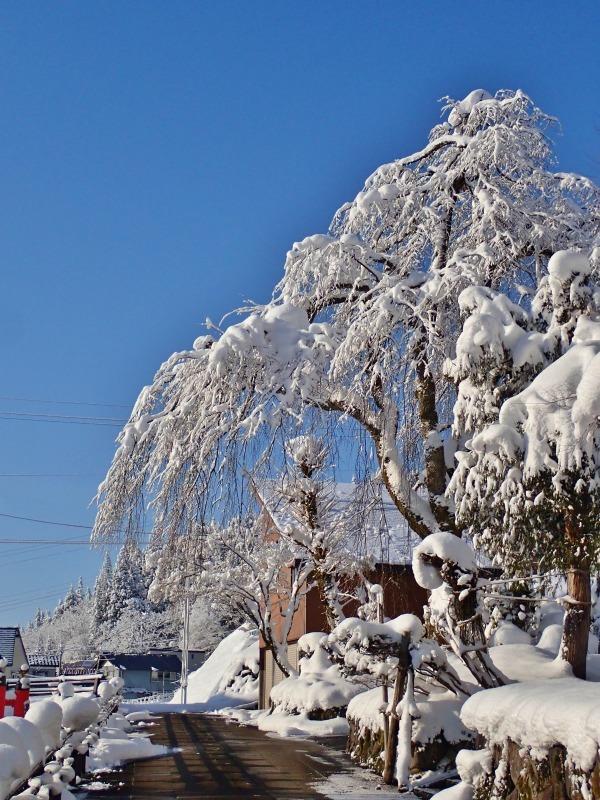 浦佐の美しい冬景色を見ることが出来ました!_c0336902_16521600.jpg