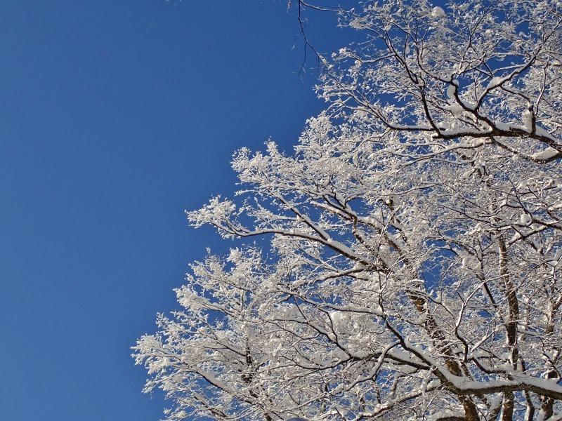 浦佐の美しい冬景色を見ることが出来ました!_c0336902_16522559.jpg