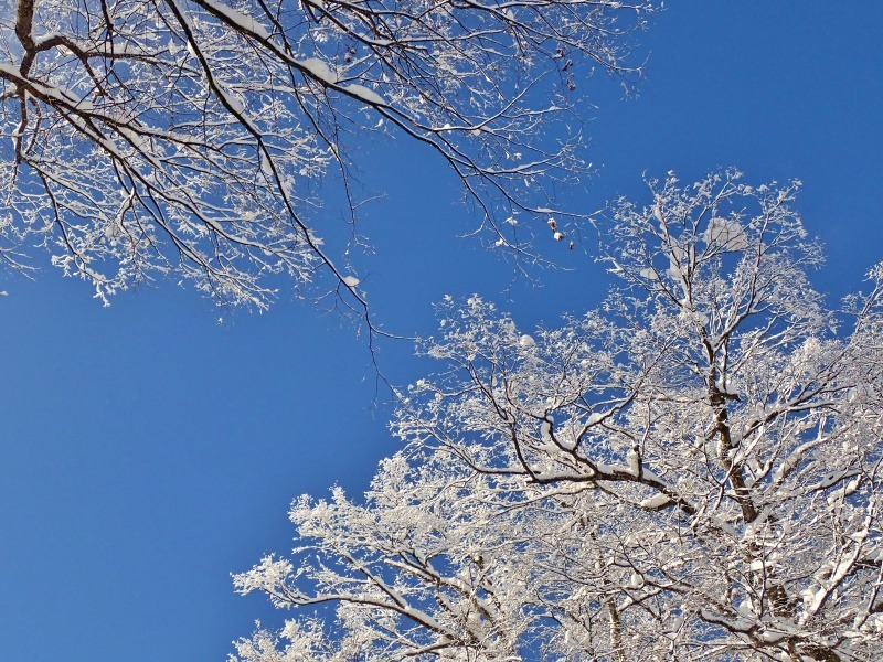 浦佐の美しい冬景色を見ることが出来ました!_c0336902_16524615.jpg