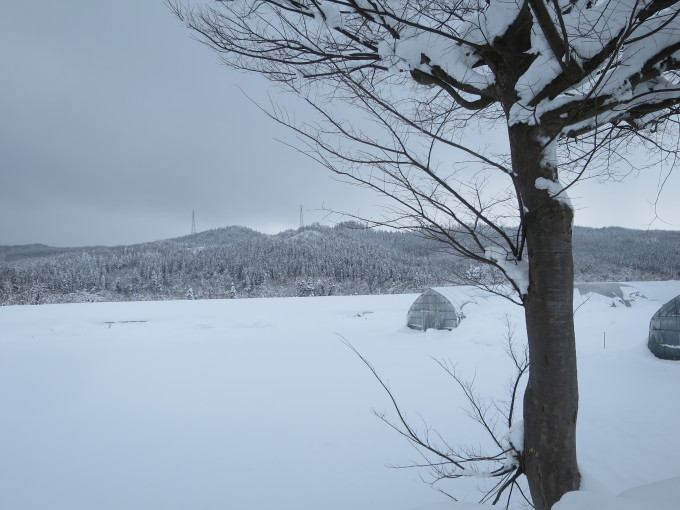 厳寒の2月らしい~が戻ってきた_a0214206_15062515.jpg