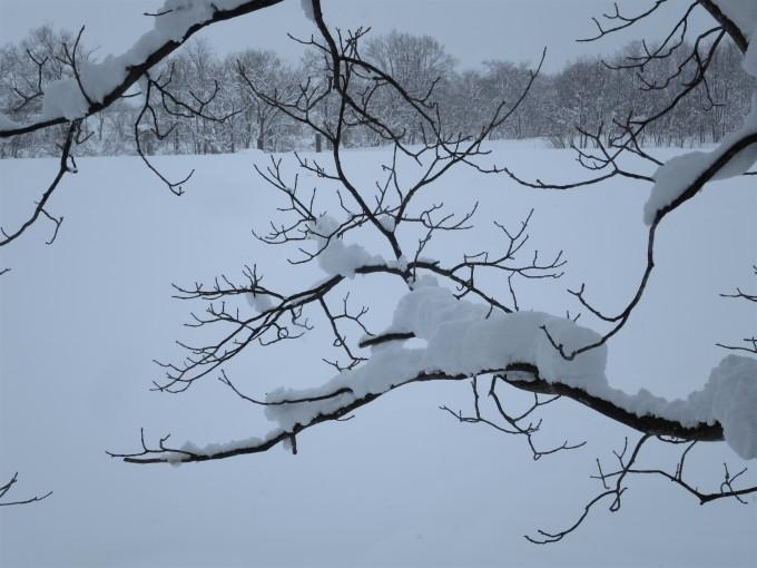 厳寒の2月らしい~が戻ってきた_a0214206_15070720.jpg