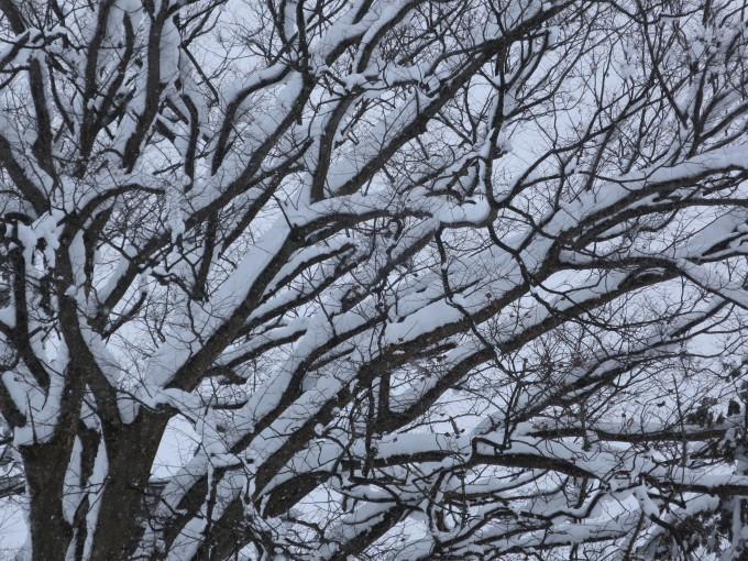 厳寒の2月らしい~が戻ってきた_a0214206_15072651.jpg