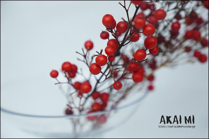赤い実_f0100215_18430162.jpg
