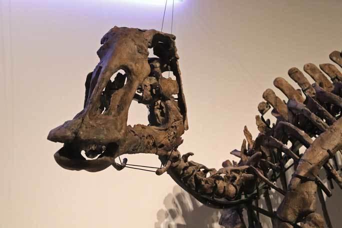 恐竜博2019~祝・新種記載!その名もカムイサウルス!!【後編】_b0355317_11183858.jpg