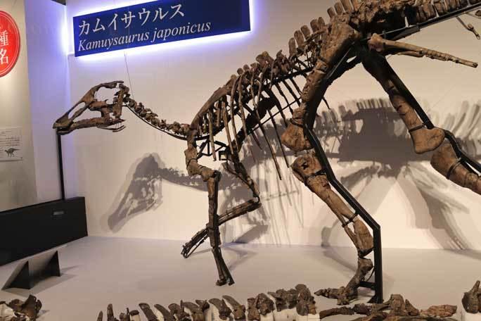 恐竜博2019~祝・新種記載!その名もカムイサウルス!!【後編】_b0355317_11223054.jpg