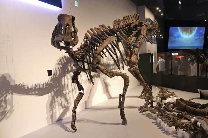 恐竜博2019~祝・新種記載!その名もカムイサウルス!!【後編】_b0355317_11281929.jpg