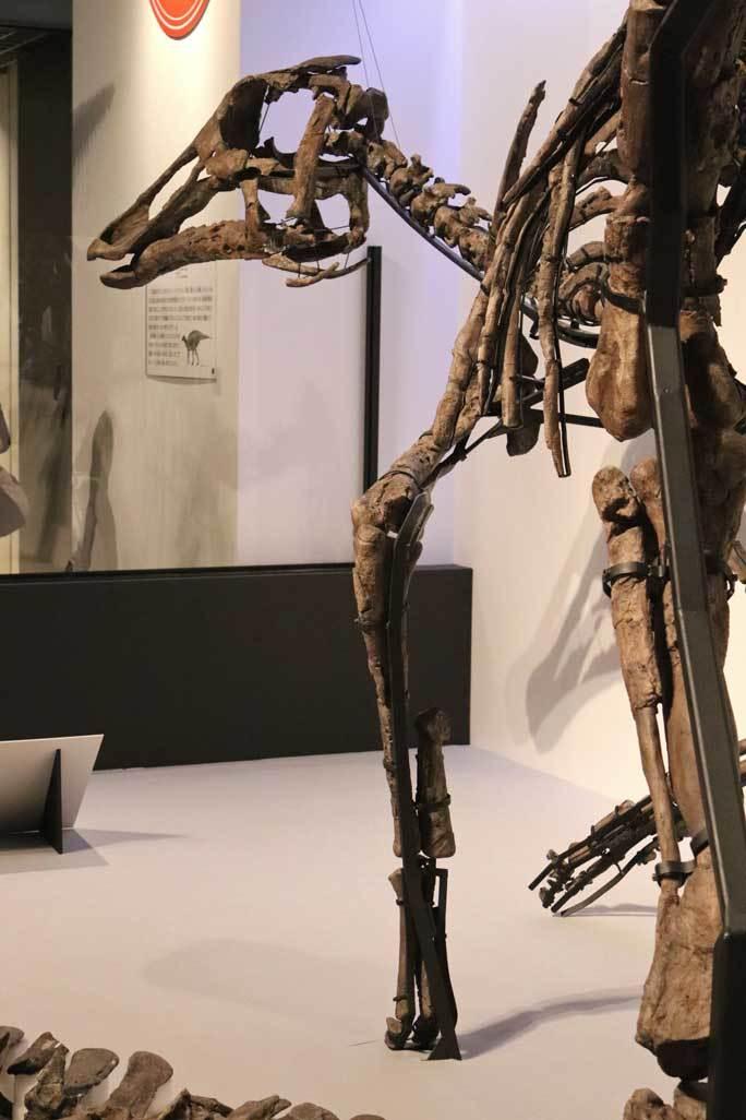 恐竜博2019~祝・新種記載!その名もカムイサウルス!!【後編】_b0355317_11353111.jpg