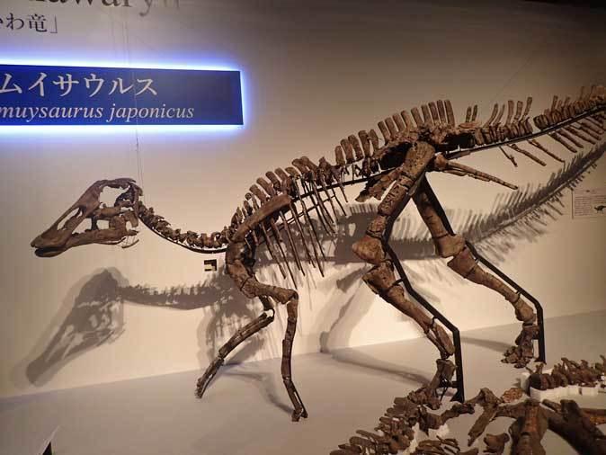 恐竜博2019~祝・新種記載!その名もカムイサウルス!!【後編】_b0355317_11355533.jpg