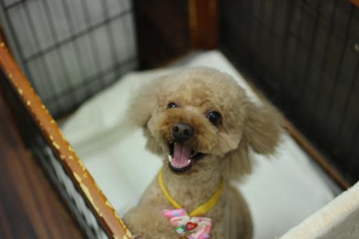 2月3日ご来店のワンちゃんです!!_b0130018_09244829.jpg