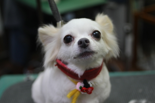 2月4日ご来店のワンちゃんです!!_b0130018_09403851.jpg