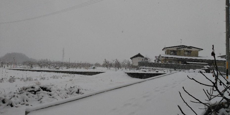 今シーズン二度目の雪かき!_f0081919_10052610.jpg