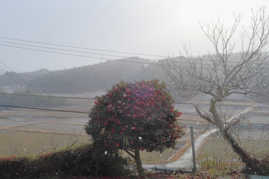 雪が降る_d0336530_20093712.jpg