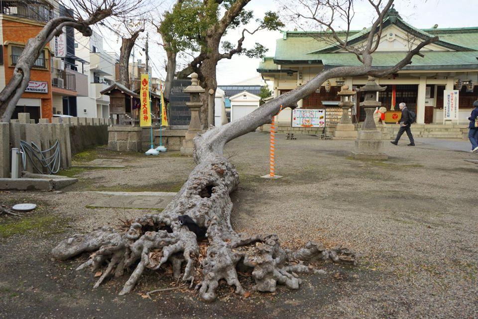 第21回「街歩き&グルメの会」を開催しました 3-9浜田くんより_b0292131_10372578.jpg
