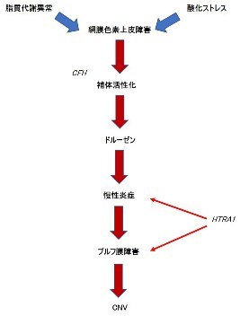 第434回大阪眼科集談会 その2 (1196)   特別講演_f0088231_14285699.jpg