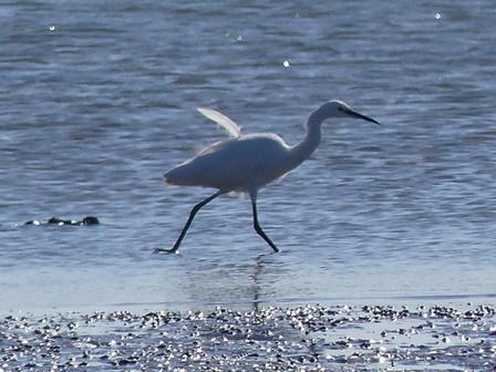 水辺の鳥の観察_a0123836_16434301.jpg